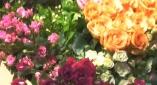 玫瑰·爱之旅