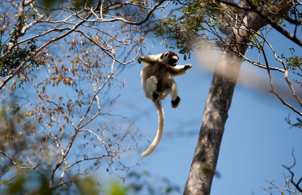 狐猴之岛:马达加斯加