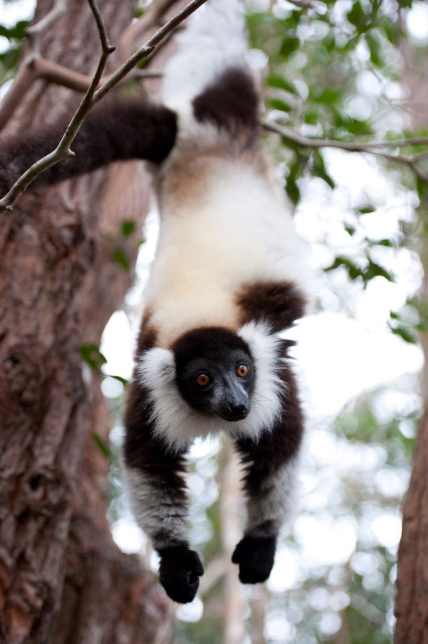 狐猴之岛:马达加斯加_电影剧照
