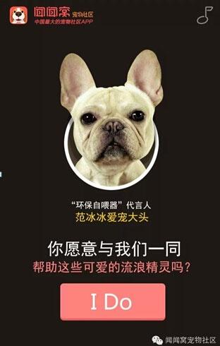 """闻闻窝""""环保自动喂食器""""是2015年中国关爱流浪动物公益事业最引人"""