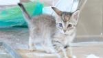 《基努猫》幕后拍摄直击 可爱猫咪剧组宠儿