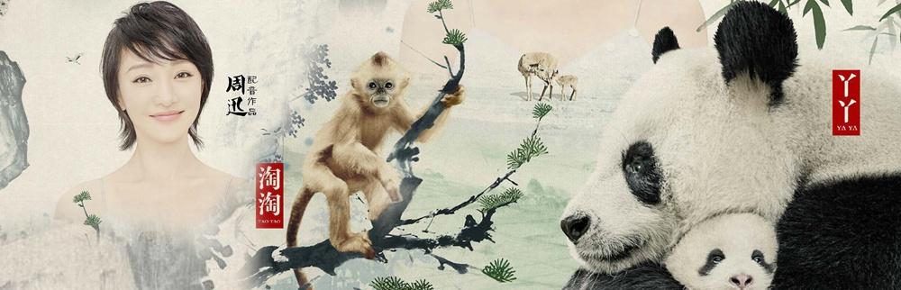 《我们诞生在中国》终极预告 周迅演绎萌宝传奇