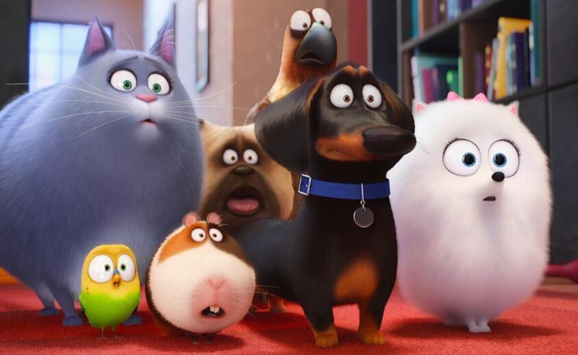 """《爱宠大机密》n脸懵逼 1905电影网专稿 在年初大卖的《疯狂动物城》中所包含的64种动物里恰恰没有猫和狗——这是因为导演认为他们是属于人类驯化的宠物,而在没有人类的城市中,也不会有他们。而这部由环球影业和照明娱乐出品的《爱宠大机密》则""""反其道而行之"""",把目光放到了这群""""被驯养""""的宠物身上。 与加菲猫、101忠狗这些""""宠物动画片""""不同的是,《爱宠大机密》不只聚焦1、2只宠物的日常生活,而第一次""""大"""