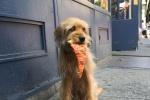《神探狗笨吉》将重启 由奥斯卡金牌制片人制作