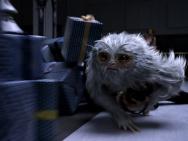 《神奇动物》获赞年度奇观 三大解谜开启魔法世界