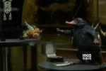《神奇动物》四天破3亿 嗅嗅银行搞笑片段曝光