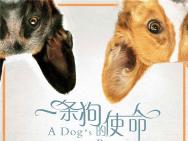 必看必爱必哭电影《一条狗的使命》内地定档3.3