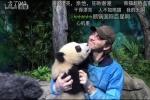 精灵王李佩斯成都喂食大熊猫 又亲又抱画面萌翻
