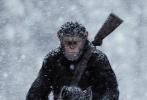 """《猩球崛起3:终极之战》再曝全新预告,预告片中凯撒开启一场""""史诗远征""""的反击之旅,中途,人类的踪迹在暴风雪中消失,猩猩们爬上电波塔尝试寻找人类位置时,神秘人偷走凯撒马背上的背包。手持武器的凯撒追进山洞,发现了神秘人竟是新种的猩猩,叫""""坏猩猩""""。它像凯撒一样会说话,曾经生活在动物园,却从来没有见过凯撒一行。在盘问交谈之中,坏猩猩道出由伍迪·哈里森饰演的Colonel上校率领的人类军队基地,反击之战即将爆发。"""