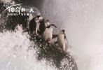 BBC经典自然纪录片《地球》系列再出续集,今日,影片片方发布定档海报与成龙配音特辑,宣布这部电影《地球:神奇的一天》将于8月11日领先全球登陆金沙娱乐院线。作为影片的中文配音演员,成龙大哥将用温暖而幽默的声音,在这个暑假带金沙娱乐观众共赴神奇自然之旅。据悉,除了常规发行的影院数字版和4K高清分辨率格式,影片还将会以杜比全景声和杜比视界的超凡影音版本呈现,这也是纪录电影在院线上映的最强规格。