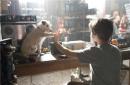 佳片|《狗狗旅馆》:或许狗狗不是你的全部,但你是狗狗的一生
