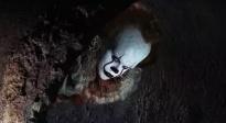 《小丑回魂》超长预告 上下分屏VR体验