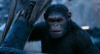 《猩球崛起3:终极之战》中国独家预告片