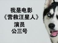 《营救汪星人》哈士奇沙龙网上娱乐来袭 公益宣传两不误