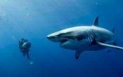 看优乐国际来测试你的深海恐惧症