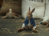 《比得兔》性格圈粉 三个关键词揭秘名兔魅力基因