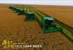 现代化农村收割水稻,20分钟搞定一亩地。