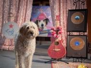 《萌犬好声音》明日上映 有谁还会被一只小狗治愈