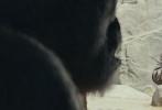 """由《末日崩塌》沙龙网上娱乐布拉德·佩顿执导,巨石强森实力演绎的好莱坞怪兽灾难巨制《狂暴巨兽》,近日曝光的""""救世英雄""""版沙龙网上娱乐,展现了来势汹汹的群兽推倒摩天大楼的震撼场面,巨石强森挺身而出,救世救""""猩""""搏命出击。"""