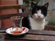 《爱猫之城》萌猫角色海报 异域风情猫萌力来袭