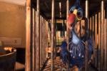 《尼斯大冒险》曝阵容 凯特·温斯莱特为海鸥发声