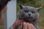 《宠物坟场》开拍 改编自史蒂芬·金最吓人小说!