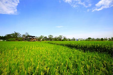 2018年重大土地资源配置与农村集体建设用地