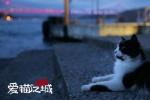 《爱猫之城》或将引进 猫奴不可错过的高分纪录片