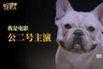 """《营救汪星人》""""个狗介绍""""上线 踢踏舞实力抢镜"""