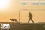 """史前冒险巨制IMAX 3D影片《阿尔法:狼伴归途》正在全国热映中,电影自上映伊始口碑节节攀升,画面制作精良被赞""""今秋最美电影"""",故事励志有能量成为众多家长、学生的首推佳作。今日该片发布史前巨兽海报,以剑齿虎、猛犸象、犀牛、野牛为主角,通过四只史前巨兽与人类主角科达和阿尔法之间悬殊的力量对比,为观众推开远古世界大门,感受史前动物所带来的极度震撼。目前影片票房突破八千万,在刚刚过去的开学季,该片成为万千家庭观影首选,被赞""""年度最佳亲子电影""""。"""