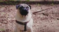 《我的冤家是条狗》香港预告片