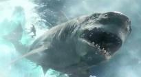 """除了""""巨齿鲨"""" 让人百看不厌的大鲨鱼还有哪些?"""