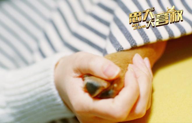 电影《忠犬大营救》于11月23日全国上映 温暖治愈系故事激发共鸣
