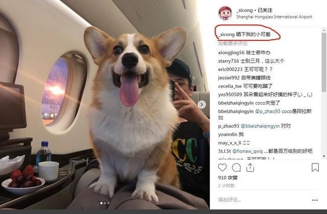 带宠物狗坐私人飞机 王思聪晒照疑坐实新恋情 女友这次不是网红
