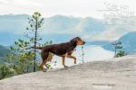 《一条狗的回家路》救助流浪动物 霍思燕现身活动