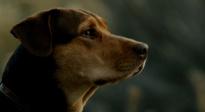 """《一条狗的回家路》联合国家地理 曝""""情寄归途""""特辑"""