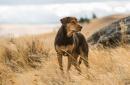 曾看哭你的狗片终于回来了,你还会被感动吗?