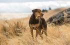 曾看哭你的狗片終于回來了,你還會被感動嗎?