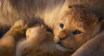 《狮子王》全新预告片