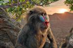 真人版《狮子王》曝新剧照 现代科技还原动物本尊