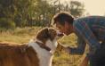 狗狗能陪伴你多久?《一条狗的使命2》曝终极预告