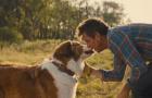 《一条狗的使命2?#20998;?#26497;预告