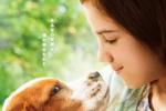 《一條狗的使命2》曝日本海報 少女CJ和狗狗對視