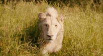 《白狮奇缘》口碑特辑