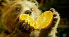 去《帕丁顿熊》的故乡一探究竟 探访动物王国秘鲁的影像风采