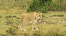 走进肯尼亚 感受非洲大陆的神秘色彩