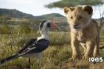 《狮子王》背后的故事 开创VR拍摄复刻非洲草原