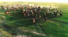 星光聚力人朗林:养马驯马12年,助无数牧民摆脱贫困