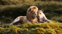 《狮子王》张学友碧昂丝联袂献声《今夜我属于爱情》预告片