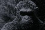 """《猩球崛起4》或换导演 """"王者""""凯撒将霸气回归"""
